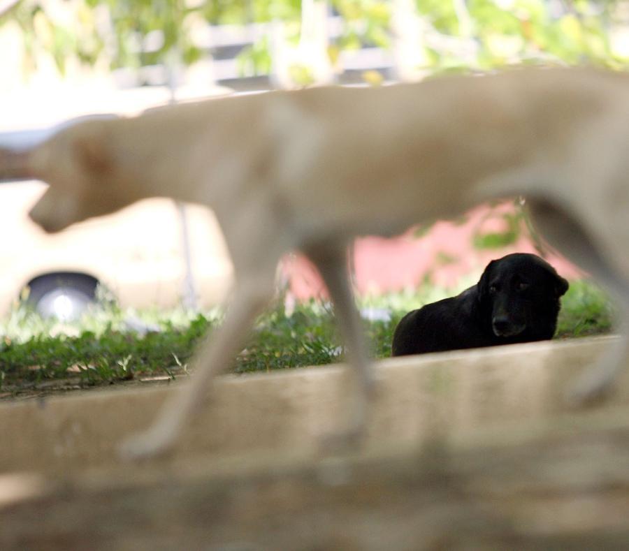 Buscan a hombre por arrastrar a su perro