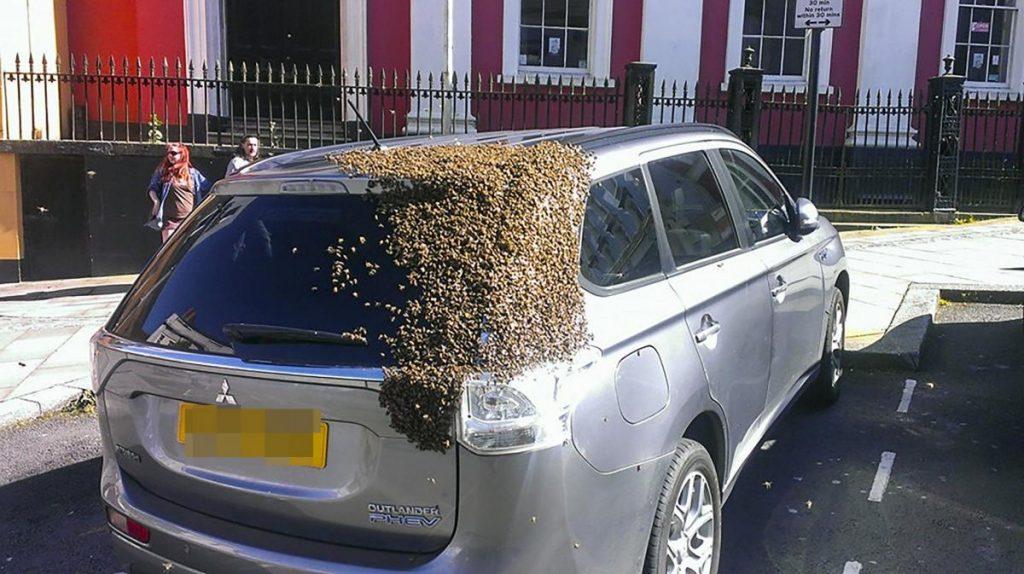 Una abeja reina quedó atrapada en un auto y 20.000 abejas lo persiguen por 2 días