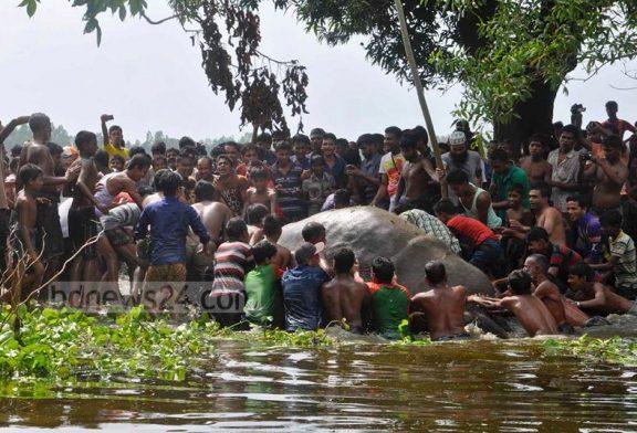 La triste historia del elefante rescatado por cientos de aldeanos