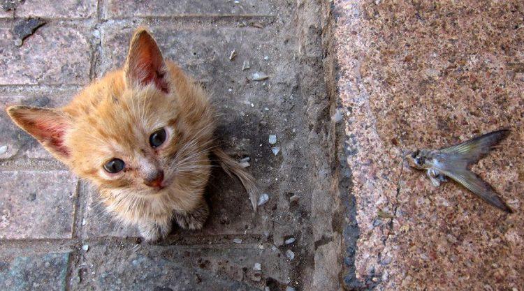 ¿Un genocidio animal? ¿Por qué quieren matar a 2 millones de gatos salvajes en Australia?