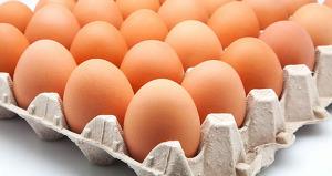 Los huevos de la porfía