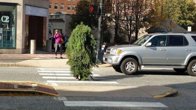 Mientras tanto, una persona vestida de árbol obstruye el tráfico, ¿por qué?