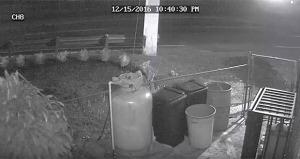 Cámaras captan el momento en que peatón es arrollado fatalmente en Río Grande (Vídeo)