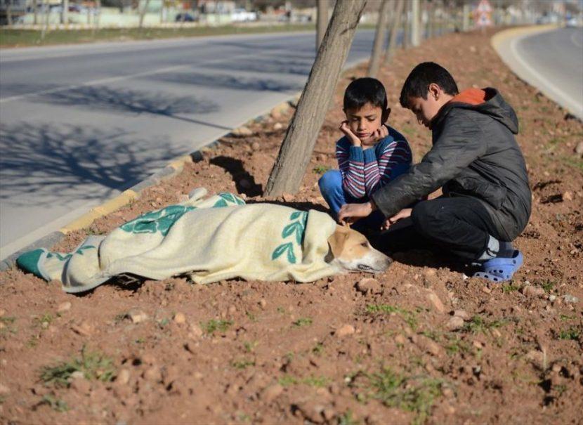 La emotiva historia de un niño sirio refugiado que ayudó a un perro atropellado