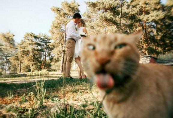 15 Gatos que arruinaron la foto perfecta