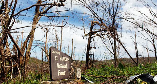 Bosque Nacional El Yunque continúa los esfuerzos de recuperación tras los huracanes Irma y María
