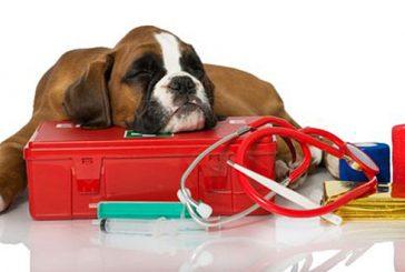 Ante nueva temporada de huracanes: Prepare kit de emergencias para mascotas